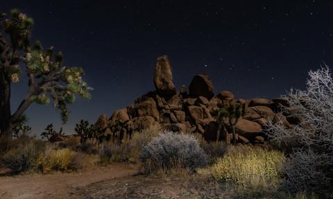 Joshua Tree Serene Night