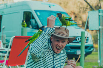 Henry and a few parrots