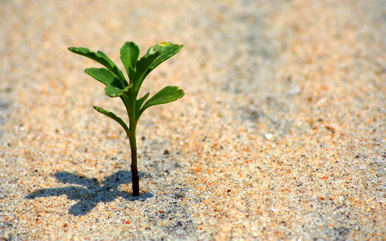 Growth_edited.jpg