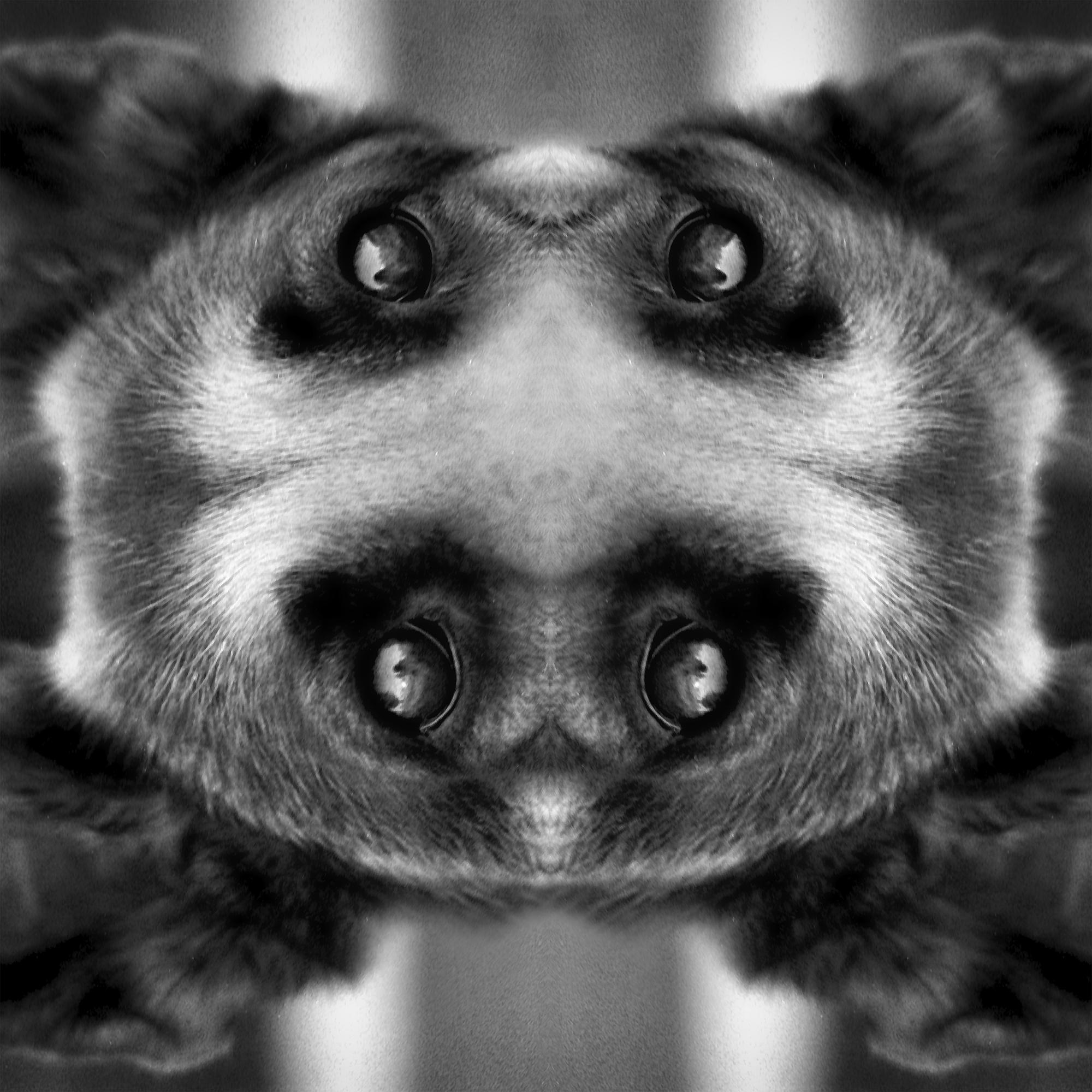 Four Eyes 1
