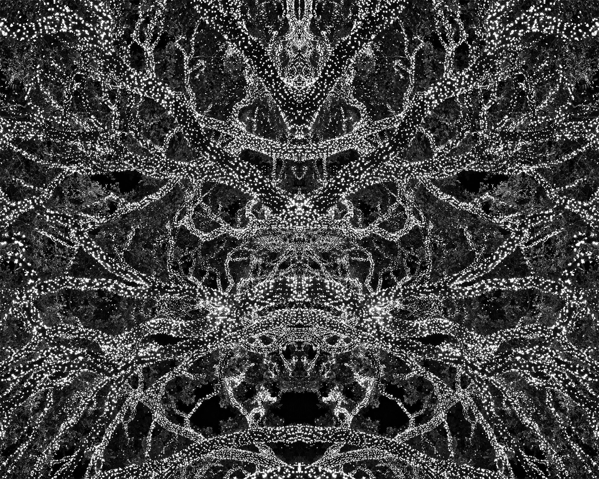 Arbor Lights Harmonix 2