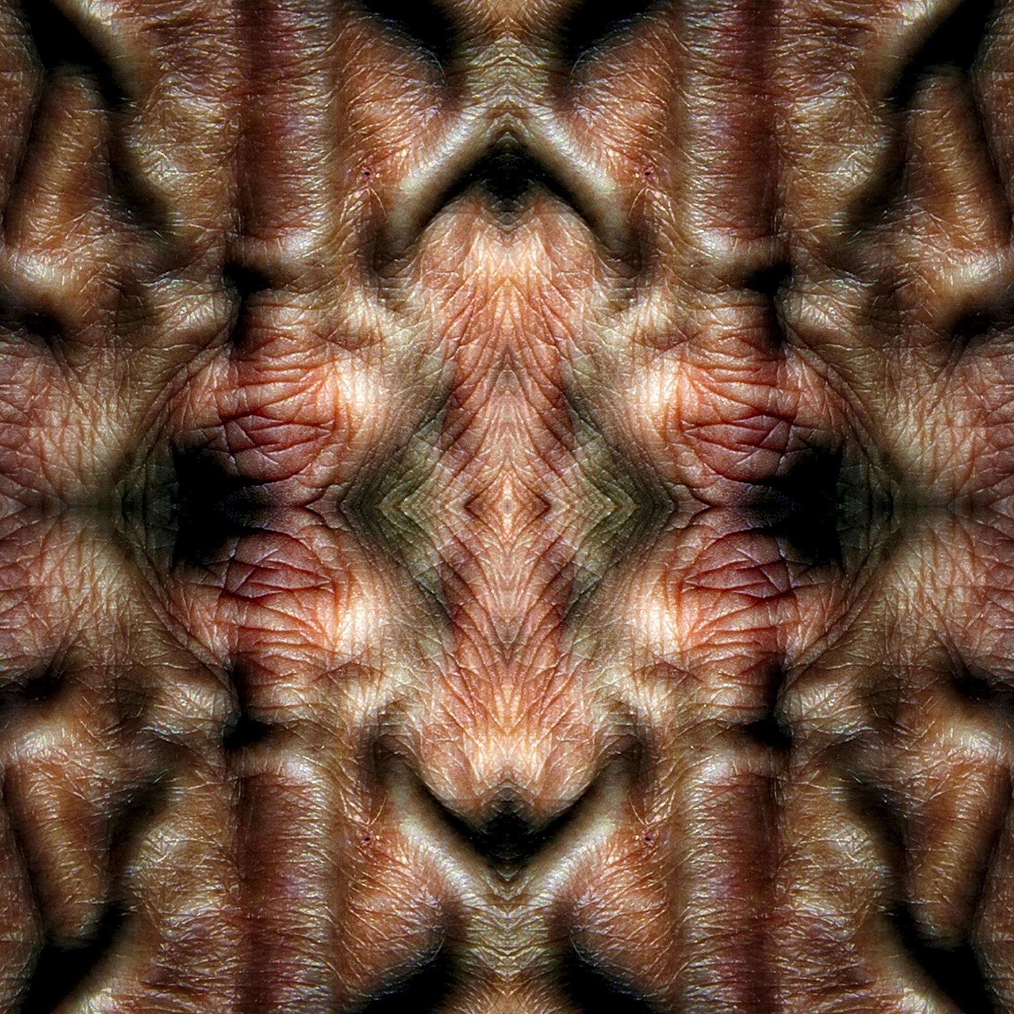 Fauna Harmonix 3