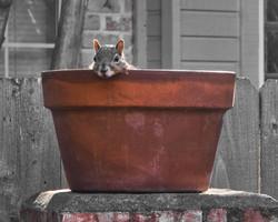 Squirrel Pot