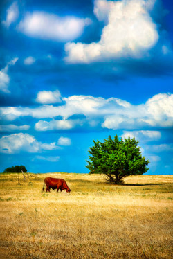 TX Pastoral