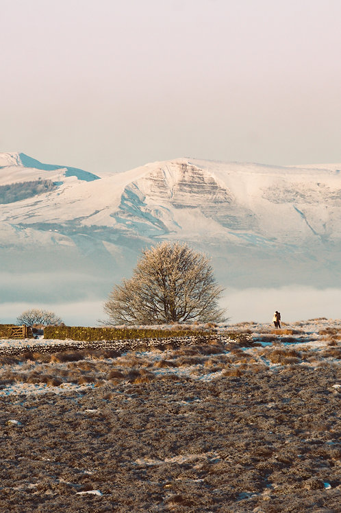A Frozen Tree and a Shivering Mountain (Portrait)