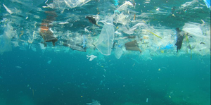 Plastics are poisoning our environment, take the challenge to go plastic free this July.