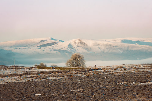 A Frozen Tree and a Shivering Mountain (Landscape)