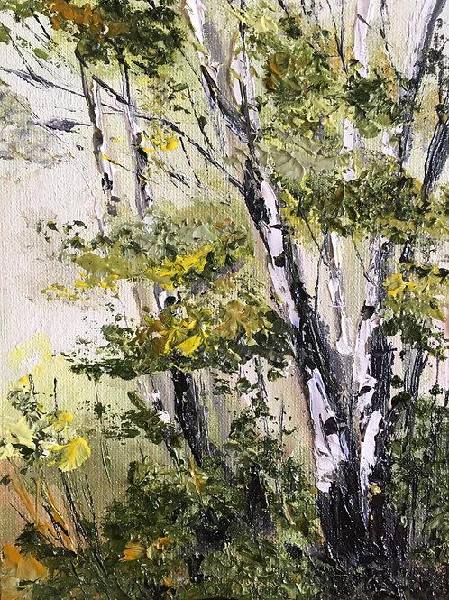 Birch Trees near Podlesie