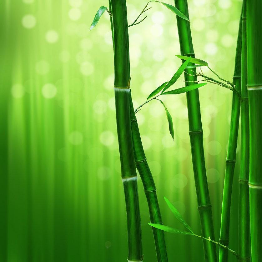 bamboo-1045972_1920.jpg