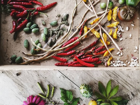 Why growing and saving heirloom seeds is important