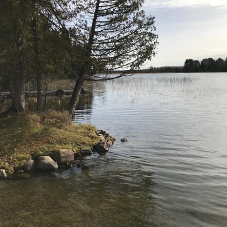 Cabin 7 Shoreline