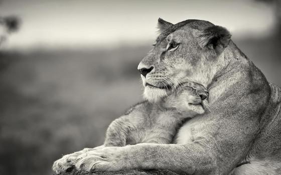 Memorable Moms