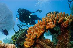 keep-diving-mypadi-course-dropdown