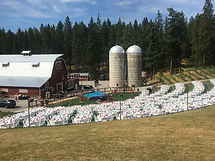 Large corporate event at Settlers Creek in Idaho