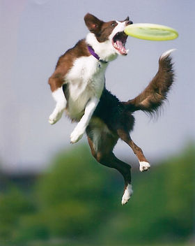 frisbeedog.jpg