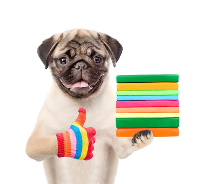 Pug puppy holding books and showing thum