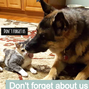 The Importance of Making Placement Plans for Your Pets Should You Pass Before Them