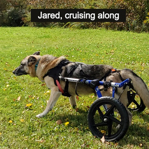 """Six Tips For Canine Wheel Cart Success"""