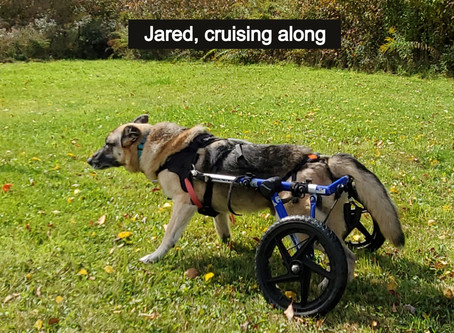 """""""Six Tips For Canine Wheel Cart Success"""""""