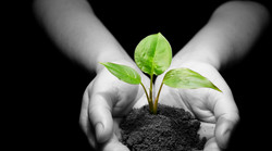 hands-with-plant-dirt32_edited.jpg
