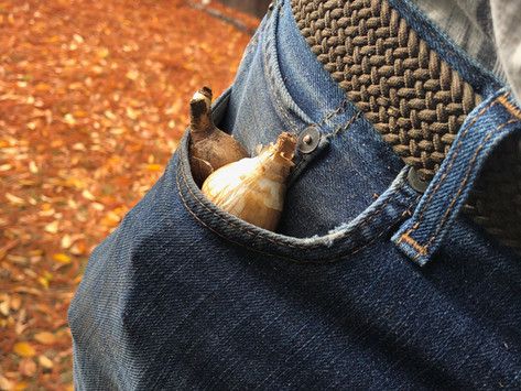 Are Those Bulbs in My Pants?