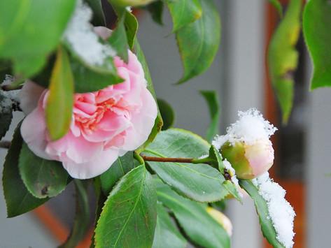Camellia, We Feel Ya
