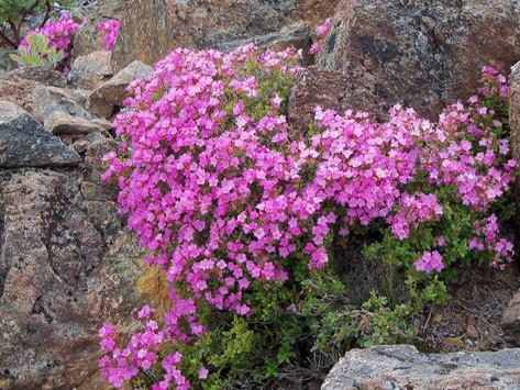 Nature's Schiddiest Garden