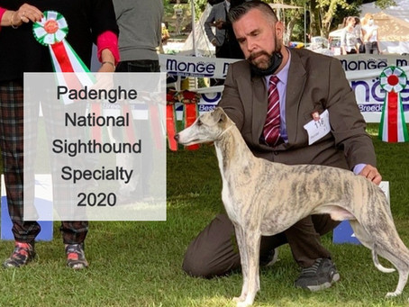 Padenghe National Sighthound Specialty 2020