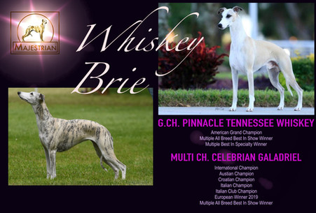 Whisky X Brie