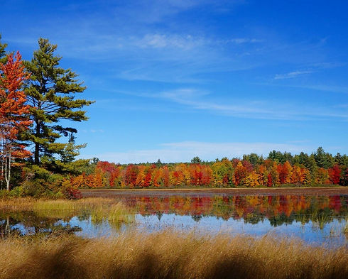 Fall foliage, changing leaves, wetland, pond
