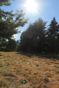 Field where we go walking.