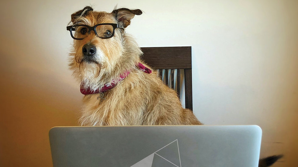 Online  Dog Training Consultation
