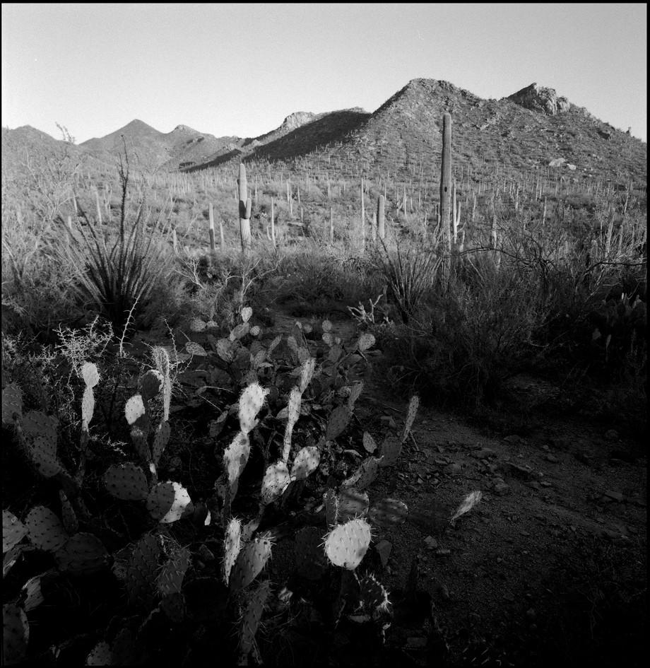 Saguaro NP West-AZ#02