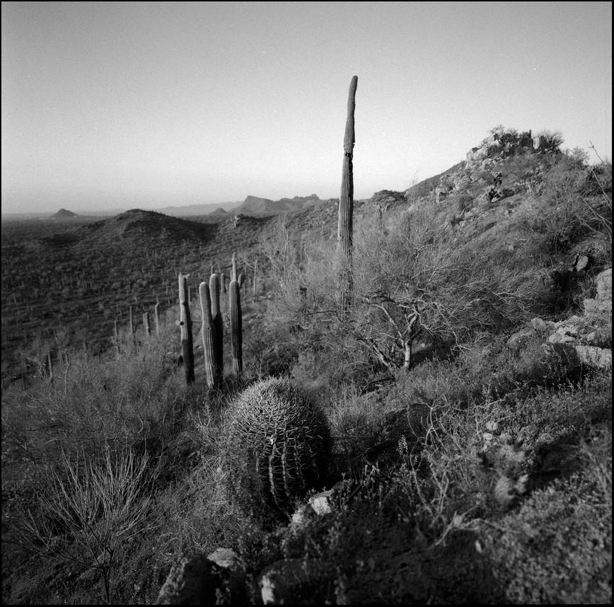 Saguaro NP West-AZ#03
