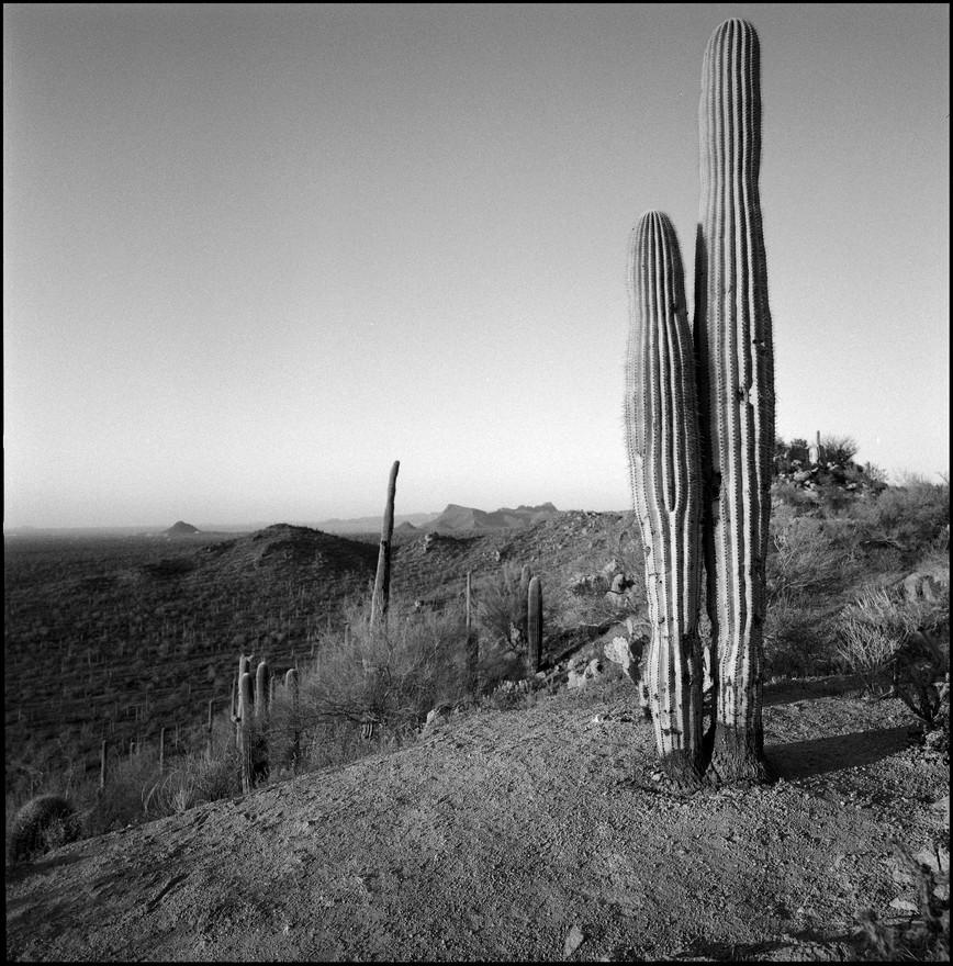 Saguaro NP West, AZ#01