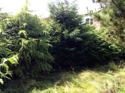 Fencing - Canford Heath before