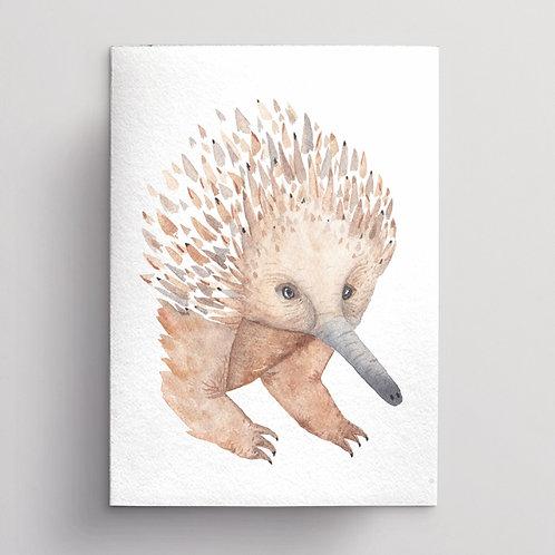 Echidna Greeting Card