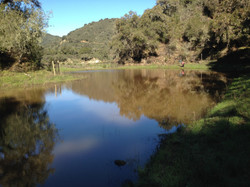 Pond for CA Red Legged Frogs (2019)