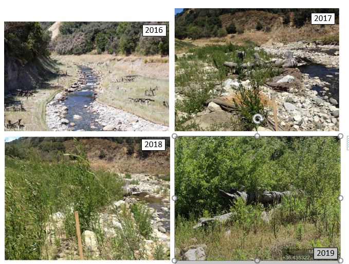 Evolution of riparian habitat