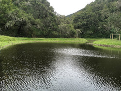 Wetland and frog pond