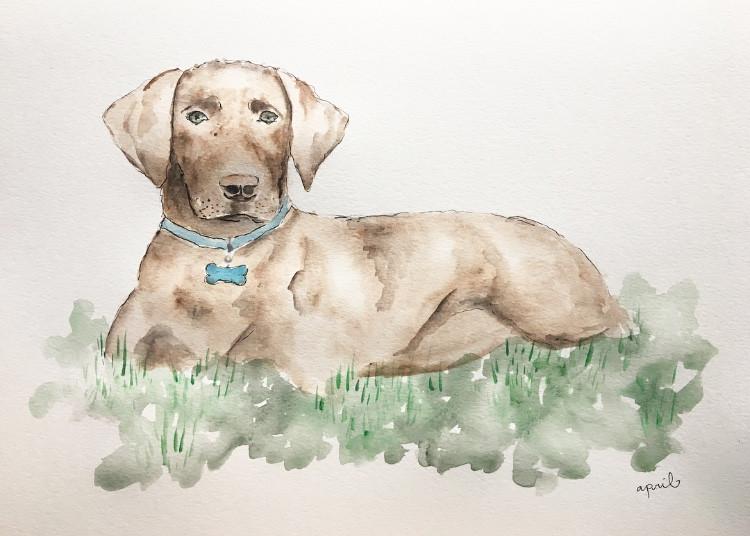 custom-dog-portrait
