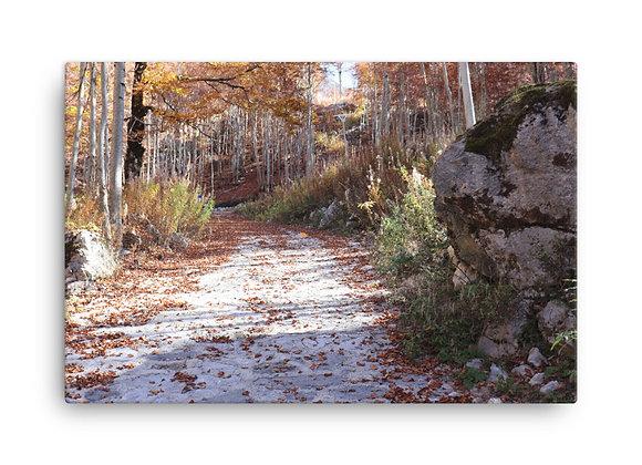 Boge Albania Birch Trail Canvas Print