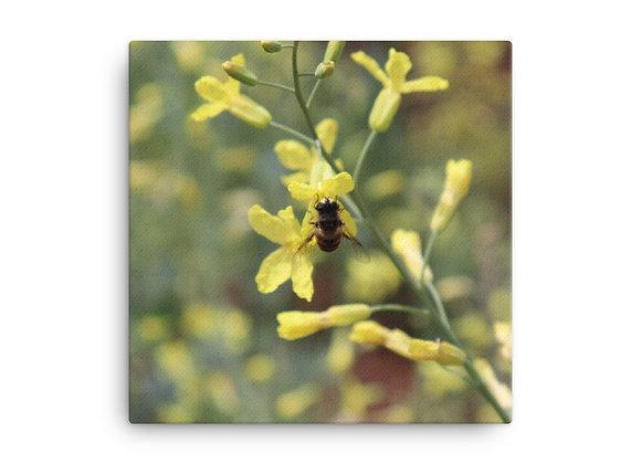 Bee Canvas Prints