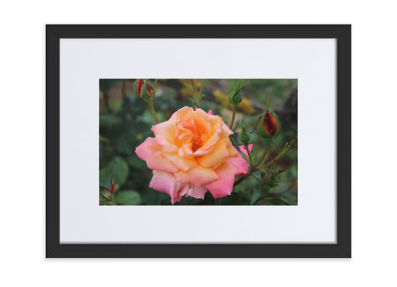 Promise Rose from Homestead Albania Matte Paper Framed Poster With Mat