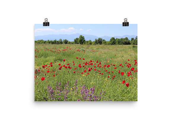 Albanian Wild Flowers Photo Paper Poster