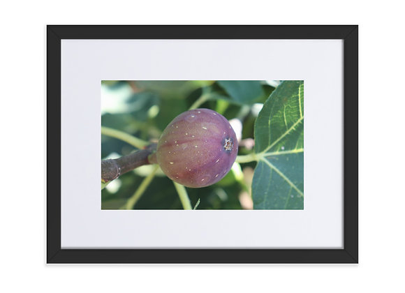 Homestead Albania Fig Matte Paper Framed Poster With Mat
