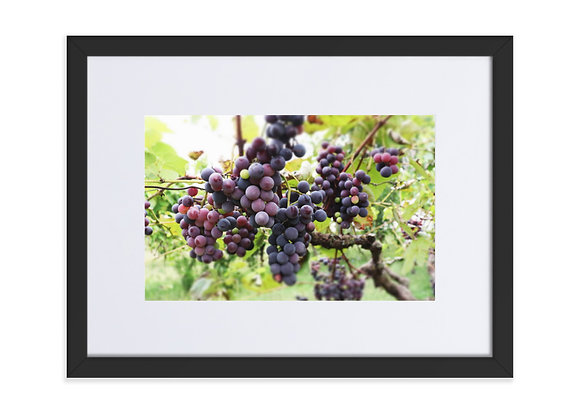 Homestead Albania Grapes Matte Paper Framed Poster With Mat