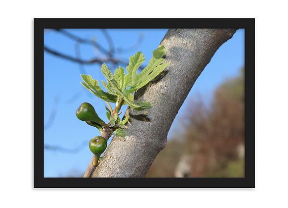 Green Fig Framed Matte Paper Poster