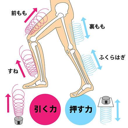 体のバネ.jpg