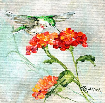265 humming bird on lantana #3.jpg